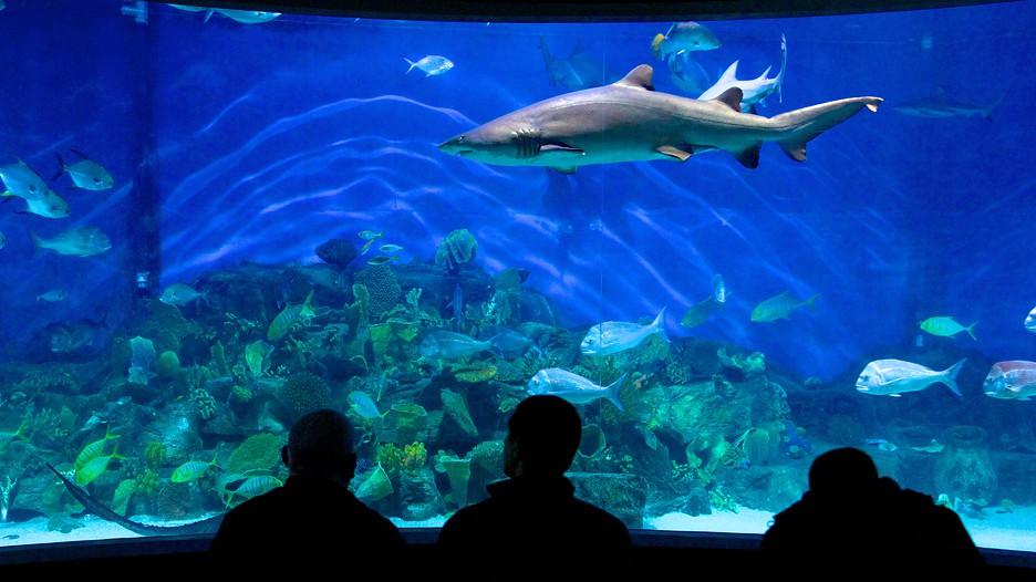 Melbourne-Aquarium-39888
